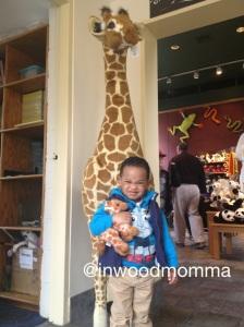 Took home a baby giraffe
